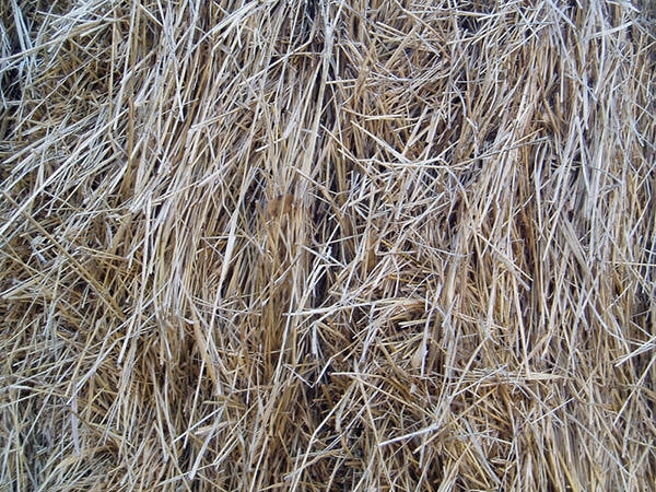 Download 15 Free Straw And Hay Textures Freecreatives