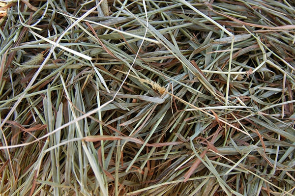 green straw hay texture