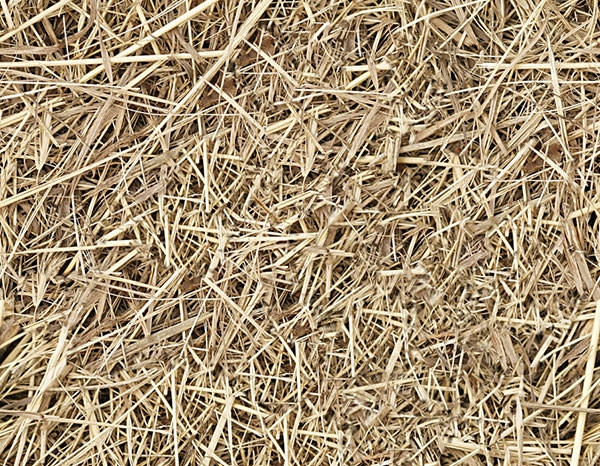 hay seamless texture
