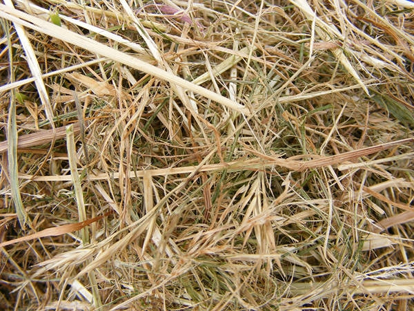 Hay Straw Texture