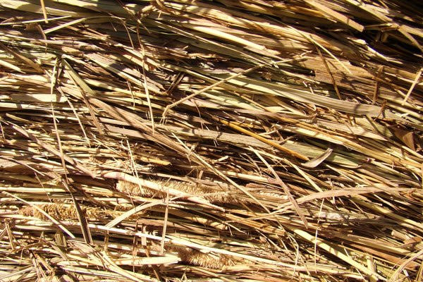 High Quality Hay Texture