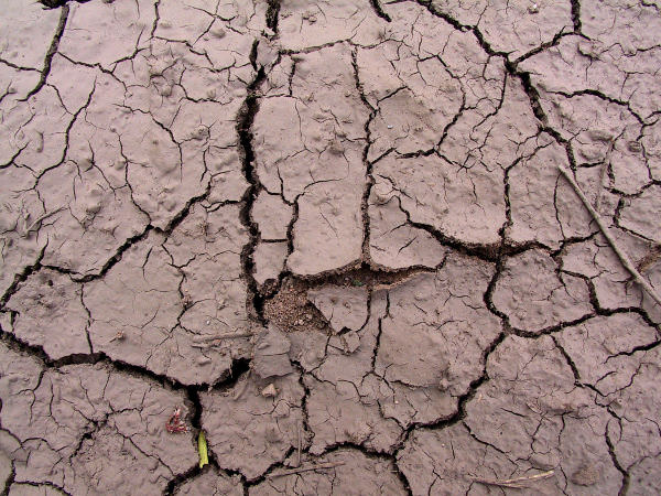 High Res Cracked Mud Texture