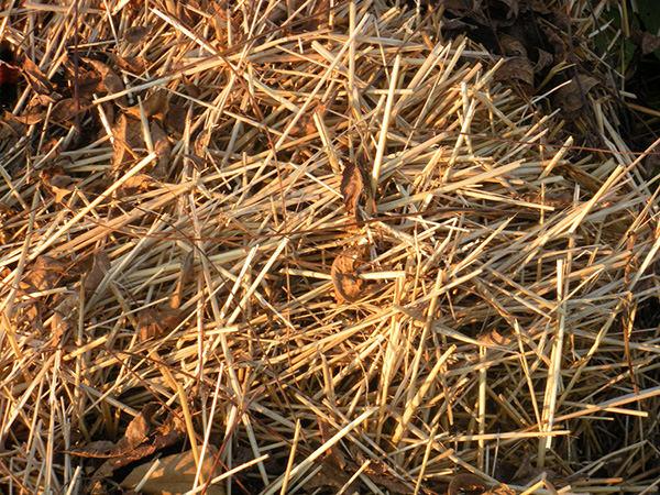 Straws Hay Texture