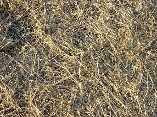 strewn_hay_new_grass_texture