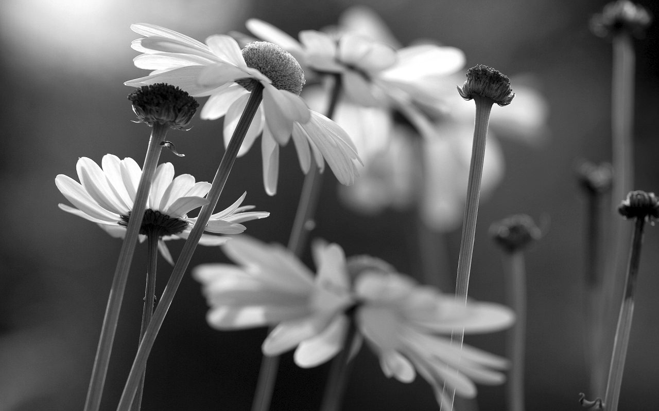 Amazing Black White Flower Background