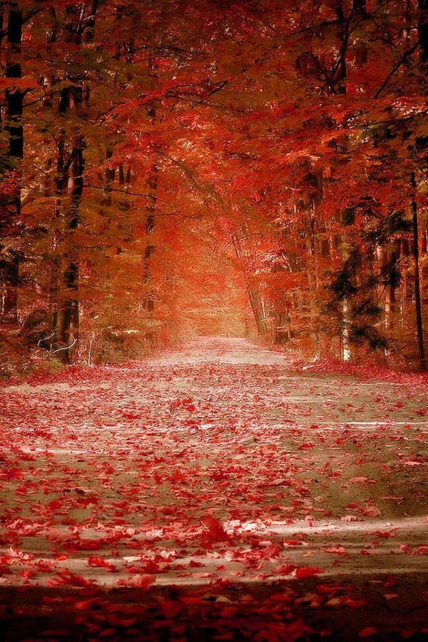 Awesome Maple Road Apple Iphone 4 Background