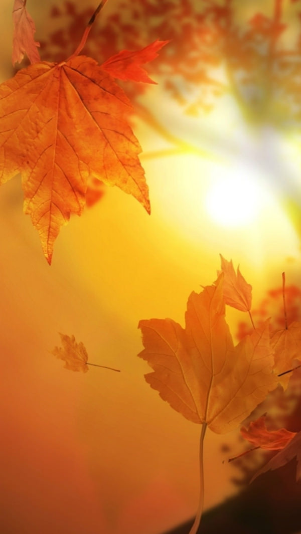 Beautiful Autumn Falling Leaves iPhone 5s Background