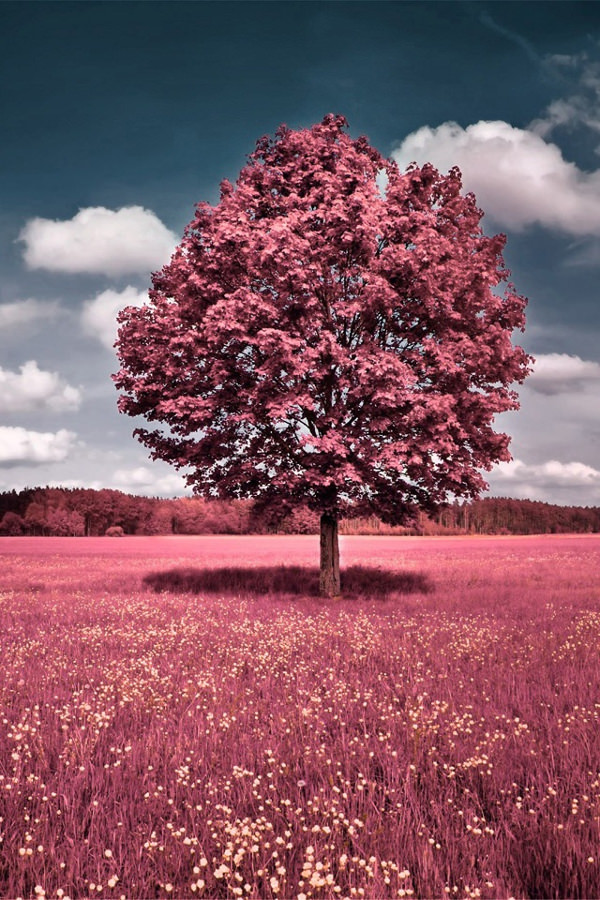 Beautiful Nature in Pink iPhone Background