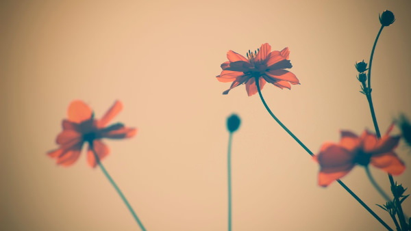 Beautiful Vintage Flower Background