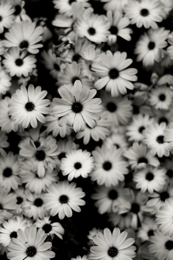 Black & White Flowers Iphone Background