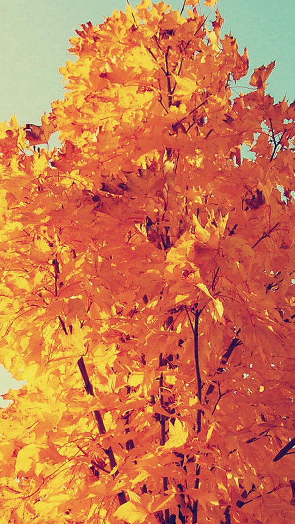 Colorful Autumn Tree Leaves iPhone 5s Background