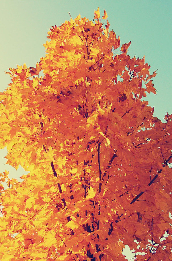colorful autumn iphone 6 plus hd background
