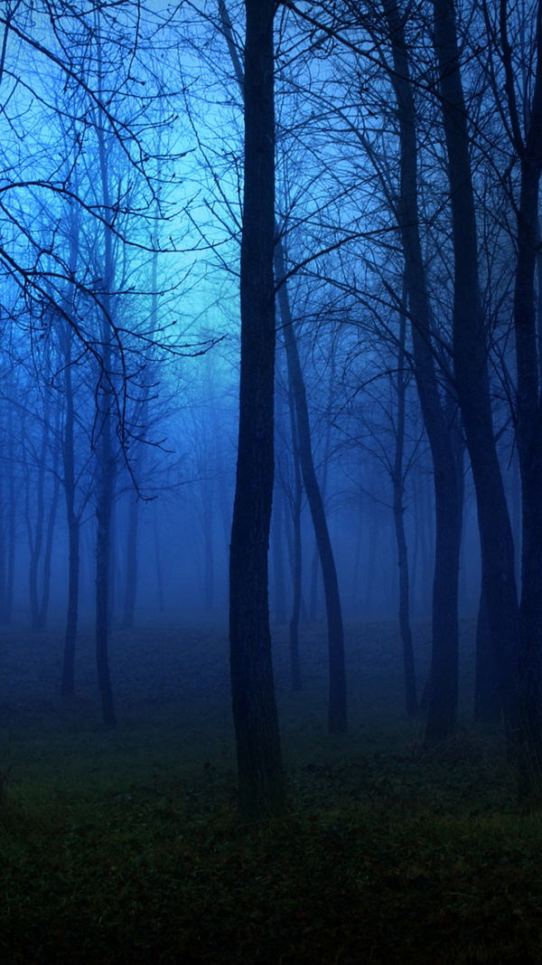 Creepy Forest Night Fog iPhone 6 Blue Background