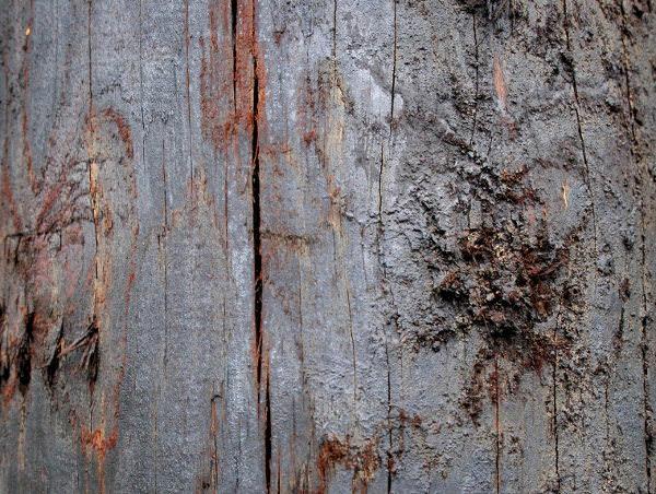 Dark Wood Texture with Grunge Effect