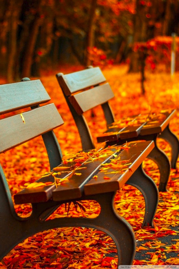 Download Fall Autumn Bench Background