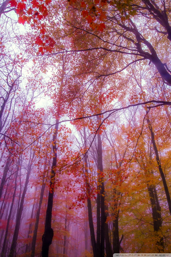 Download Foggy Colors Background For iPhone