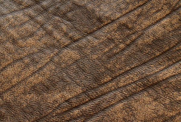 Download Free Brown Leather Texture