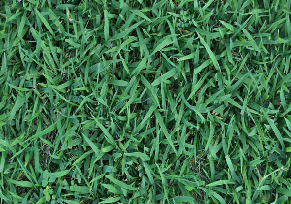 Download Free High Resolution Grass Texture