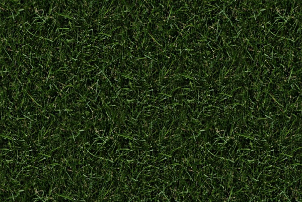 Download High Resolution Free Grass Texture