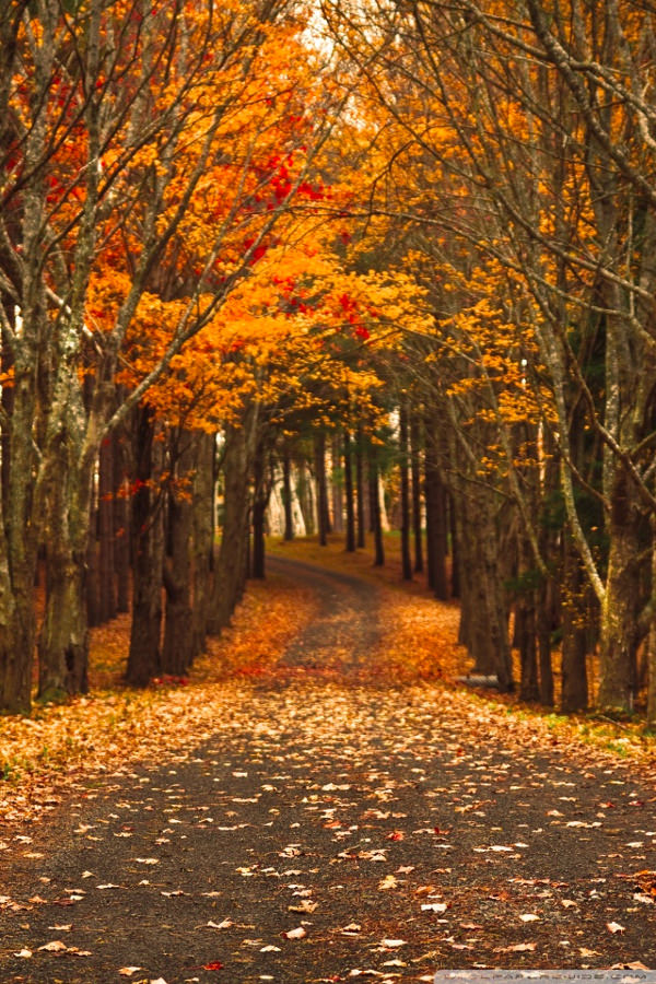 Download Late Autumn Background For Free