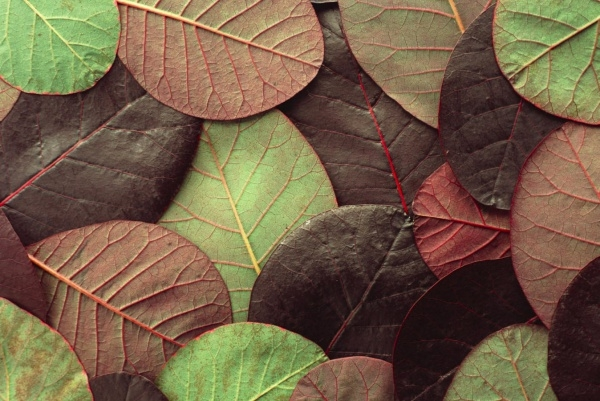Download Leafy Pattern For Free