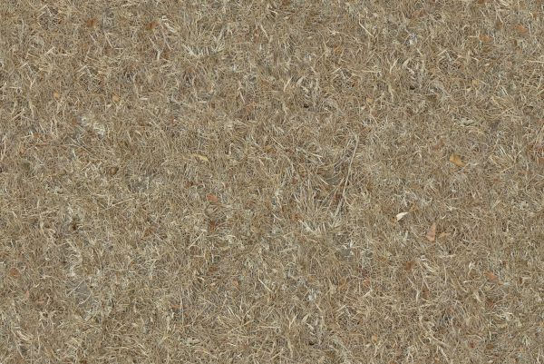 Dry Grass Seamless Texture Free Download