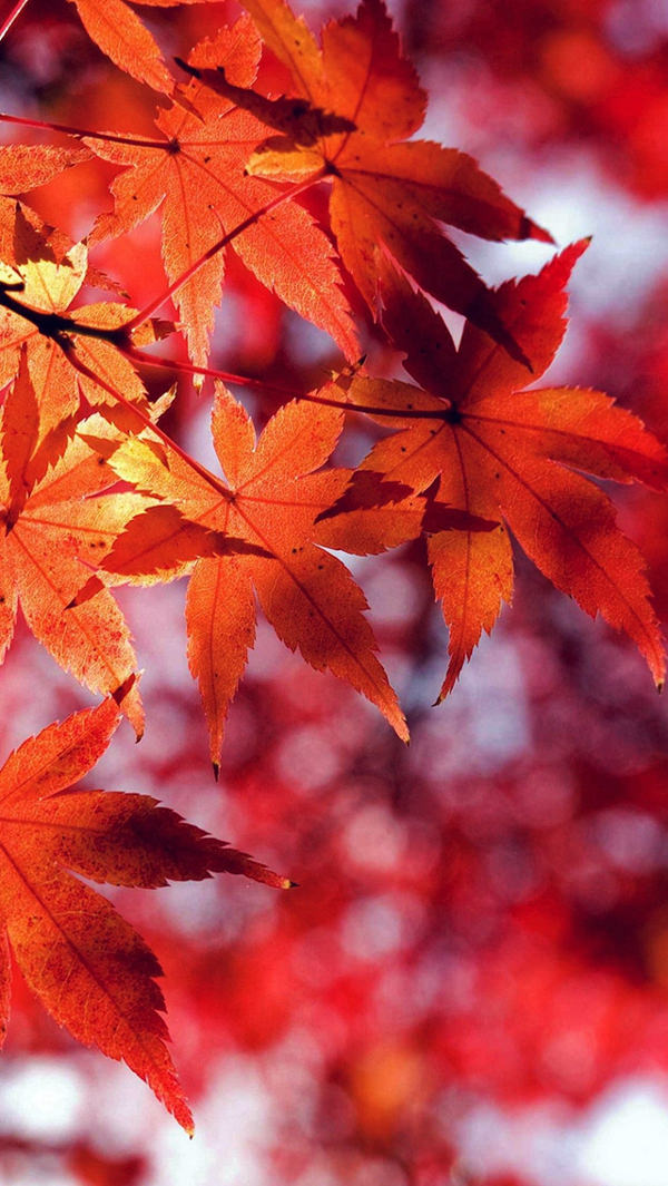 Fall Leaf Red Mountain iPhone 5s Background