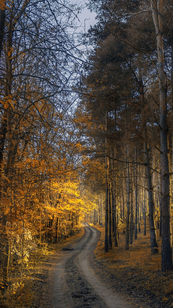Free Autumn Forest Way iPhone Background