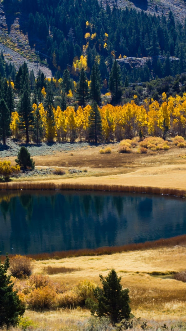Free Autumn Lake iPhone Background