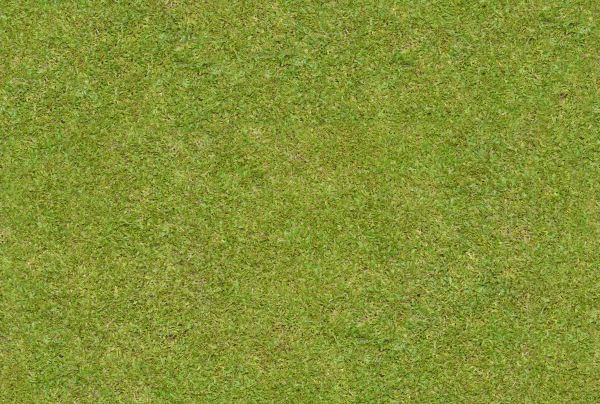Free Flattened Grass Seamless Texture