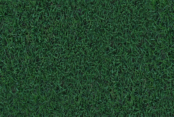 Free Seamless Grass Texture For Download