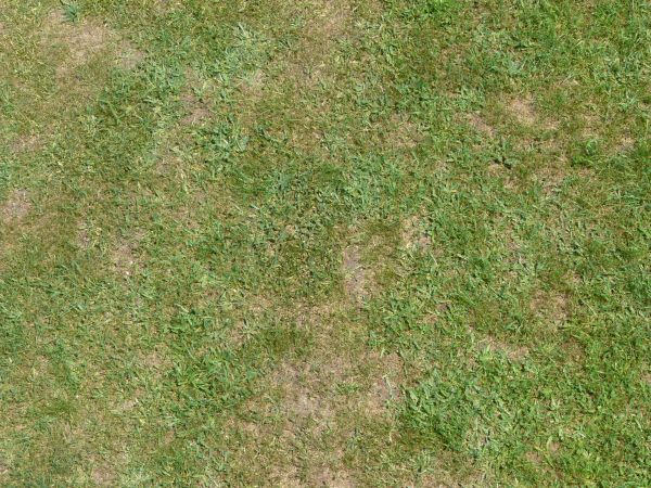 Free Seamless Grass Texture For You