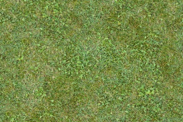 Free Tileable Green Mixed Grass Texture