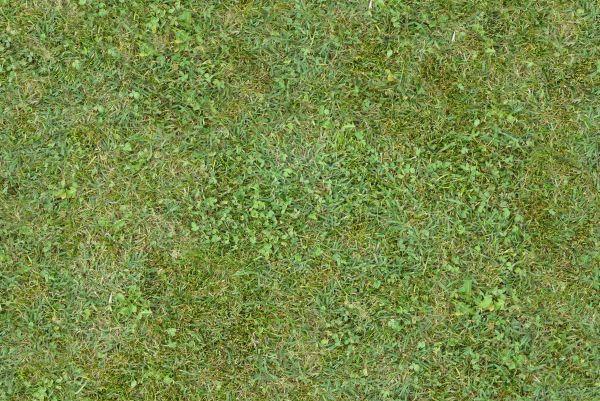 Free Tileable Green Mixed Grass Texture