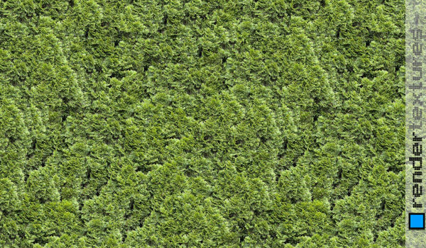 Grass Seamless Texture For Free