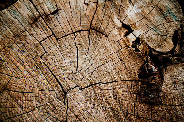 Grunge Effect Wood Grain Texture