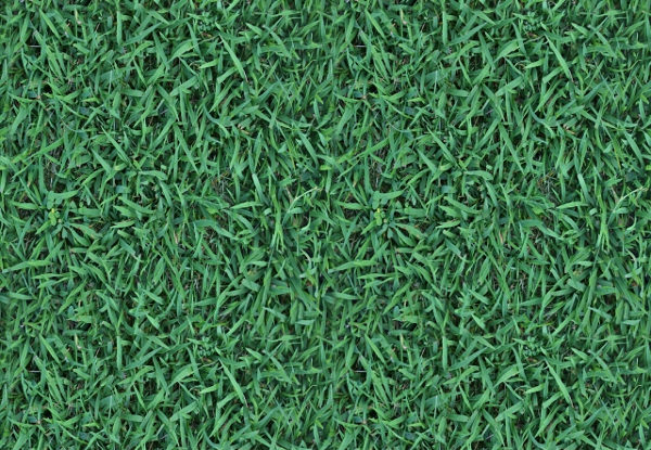 High Resolution Free Grass Texture