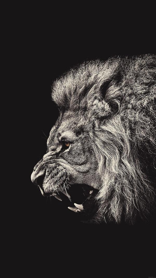 Lion Portrait iPhone 6 Plus HD Background
