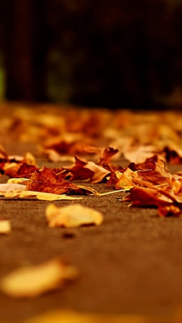 Nature Yellow Fall iPhone 5s Background