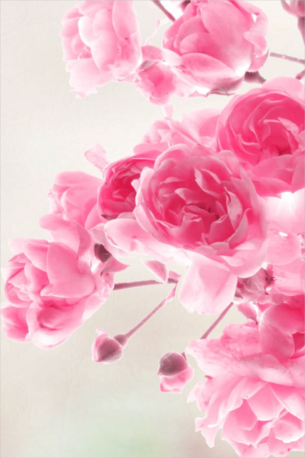Pink Roses Flowers iPhone Background Free
