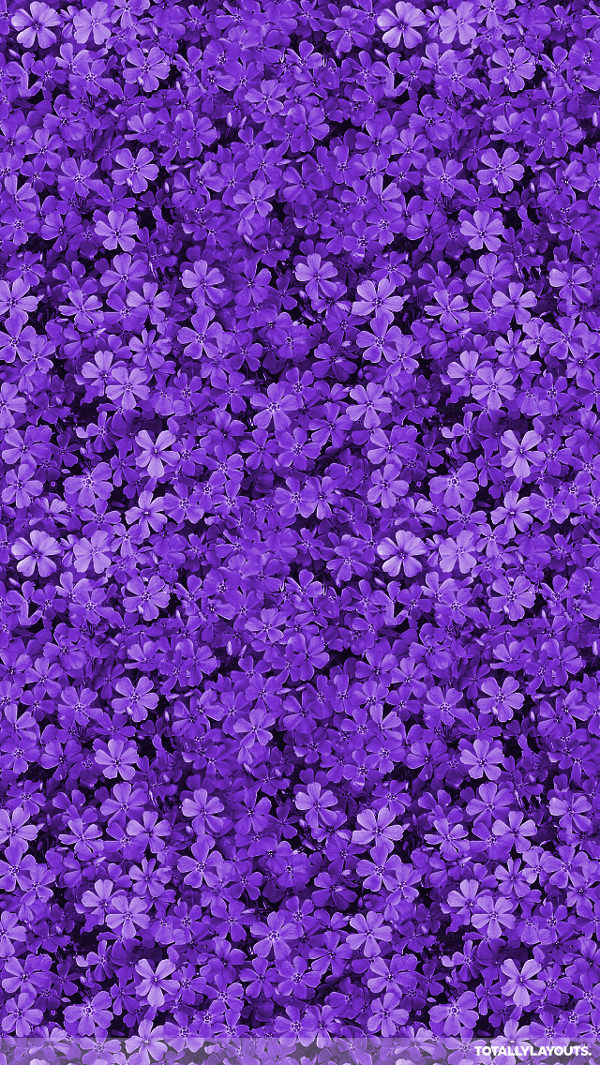 Pretty Field of Purple Flowers iPhone Background