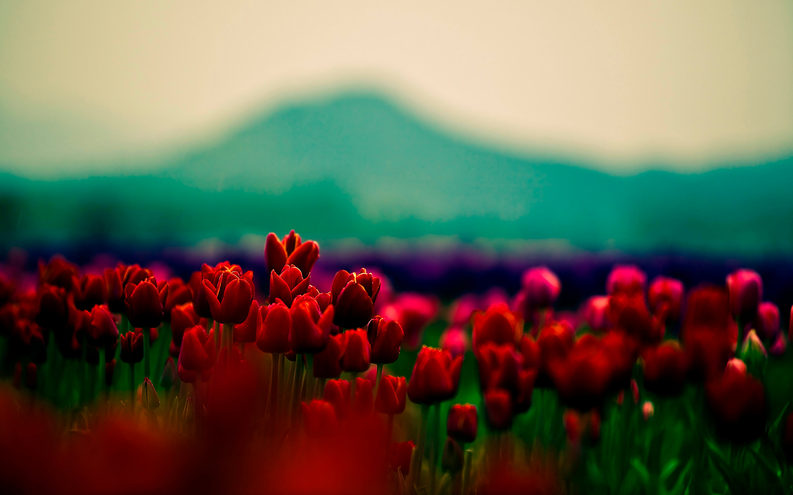 20+ Tumblr Flower Backgrounds | Wallpapers | FreeCreatives