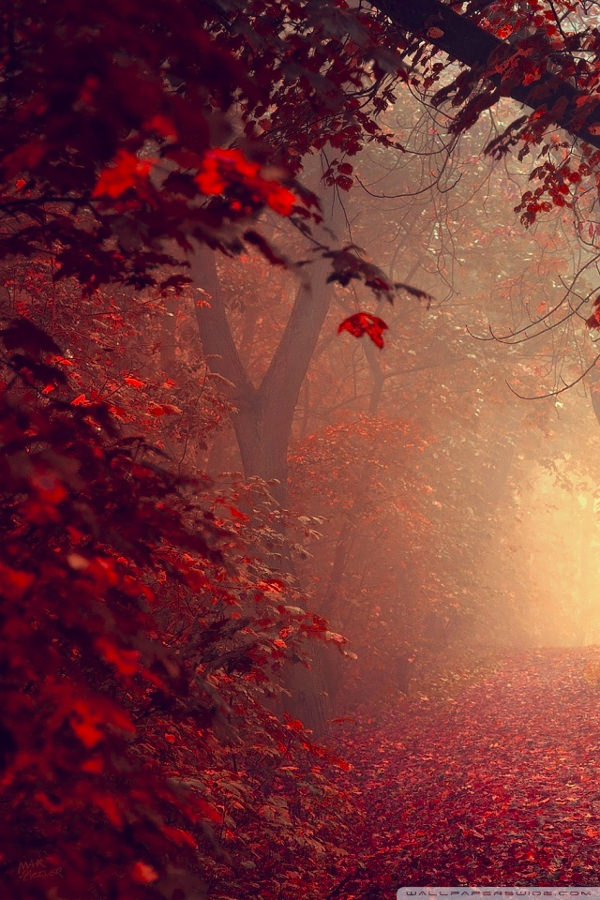 Red Forest Path iPhone Background For Free