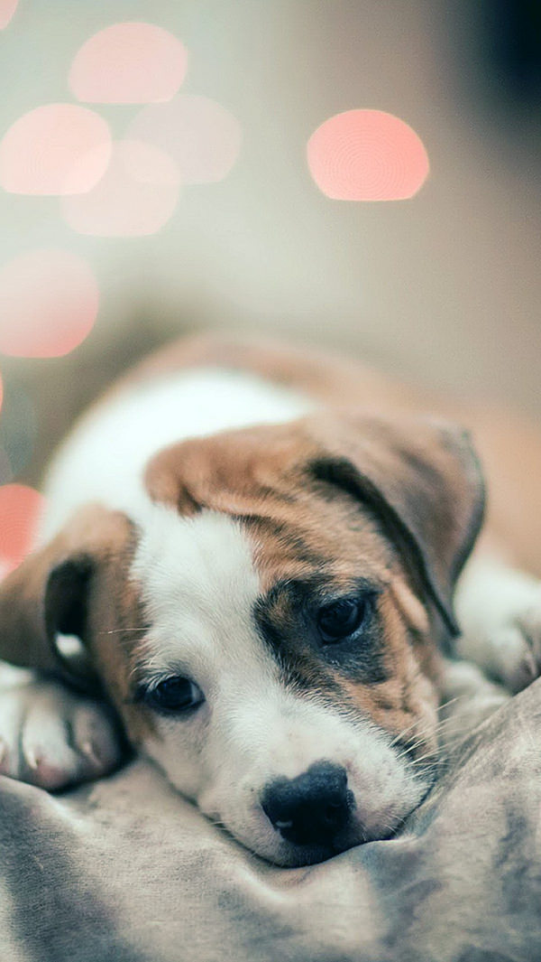 Sad Puppy Dog Girly iPhone 5s Background