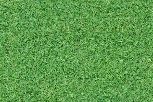 Seamless Grass Texture For Free Download