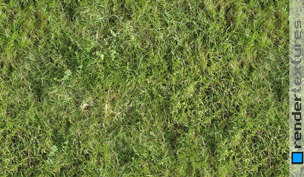 Seamless Grass Texture For Free