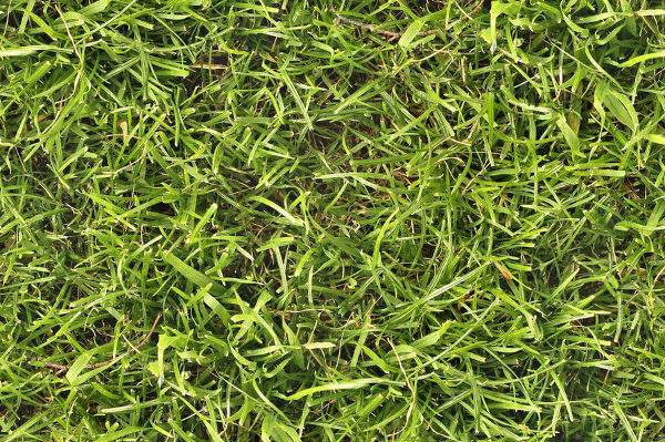 Seamless Grass Texture Free Download