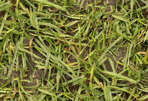 Seamless Wet Grass Texture