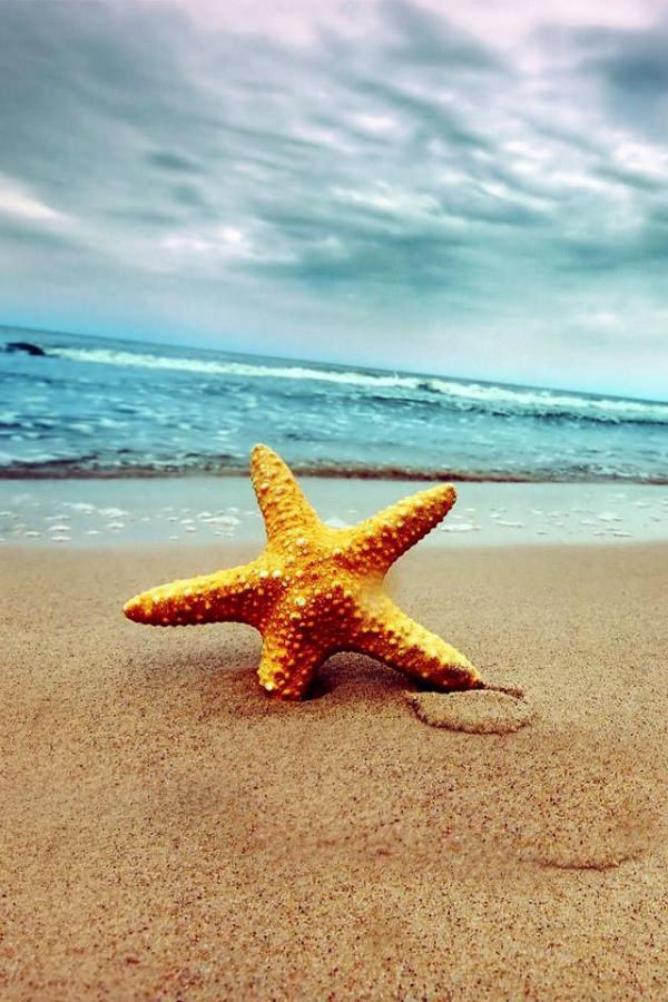 Star Fish on Beach iPhone 4 Background