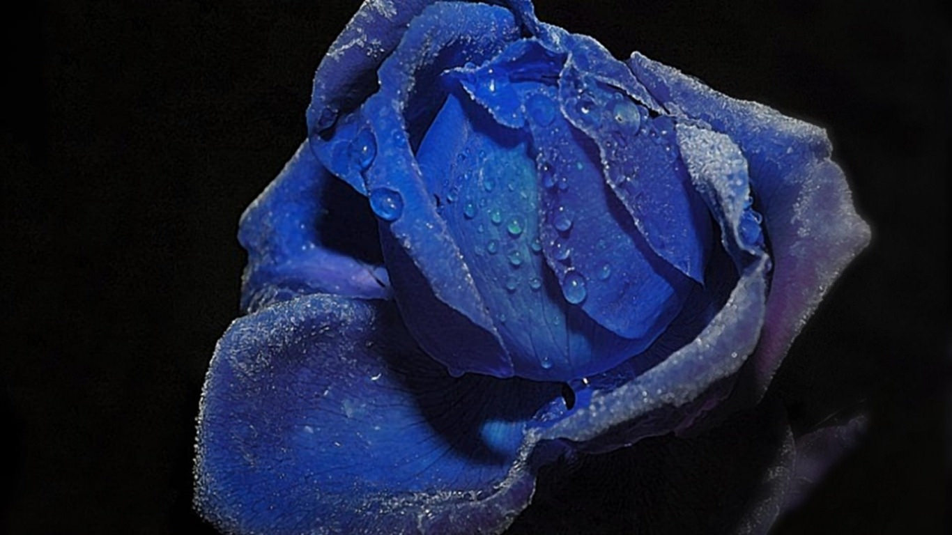 Tears of Blue Rose Tumblr Background